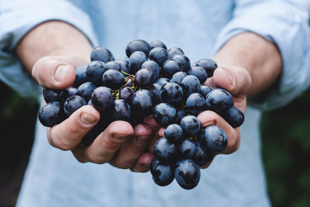 natural winemaking - grapes in hand