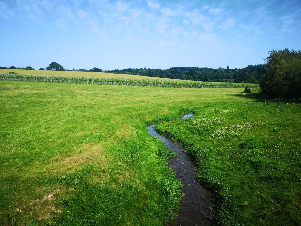 squerryes vineyard and stream