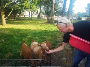 pet goats of tillingham wines