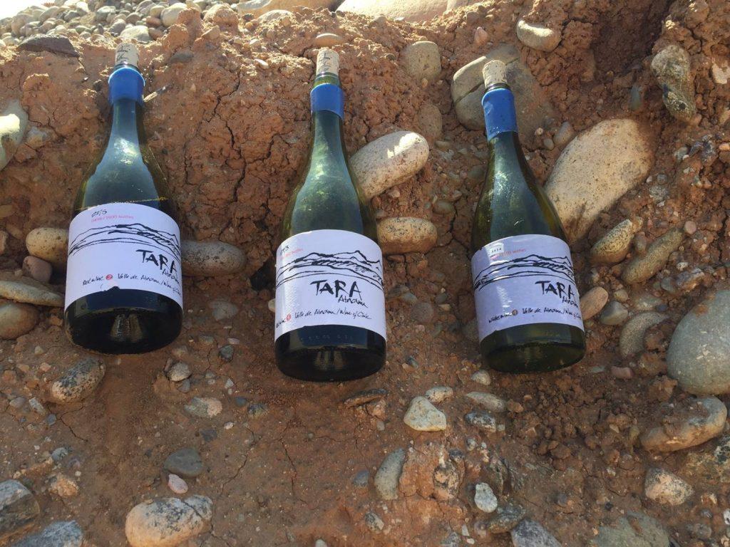 tara wines in the soil of the atacama desert