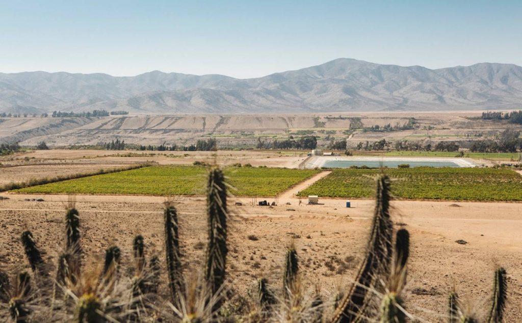 tara vineyard in atacama desert