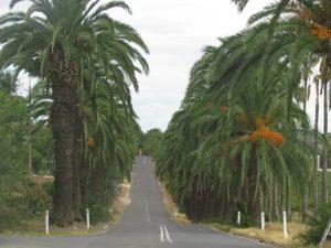 seppeltsfield road